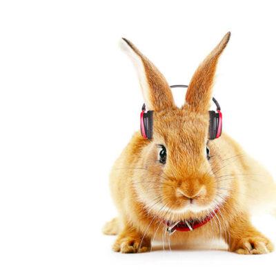 Hase mit Kopfhörer