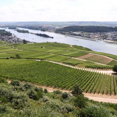 Johannes Brahms wanderte sehr gerne durch die Weinberge in Rüdesheim