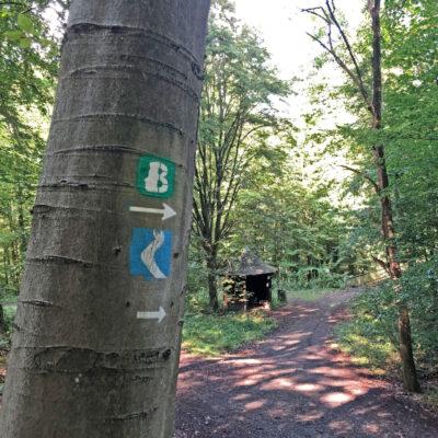 Der Beethoven-Wanderweg im Siebengebirge