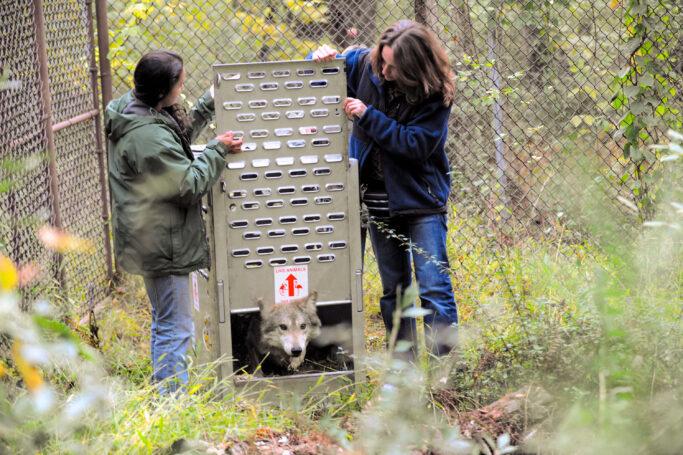 Hélène Grimaud setzt sich für den Tierschutz ein